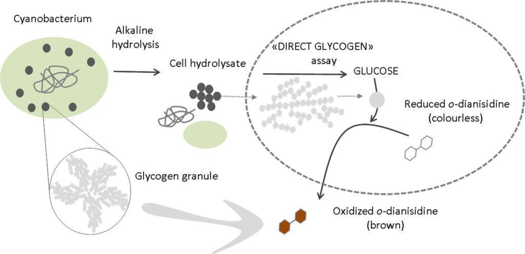 Nuevo estudio en Journal of Microbiological